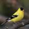 BirdsZone++